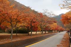 韓國-內藏山 내장산 Naejangsan