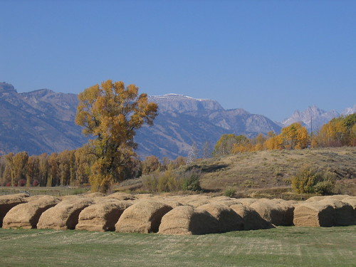 305 - Pratt Ave Haystacks 6