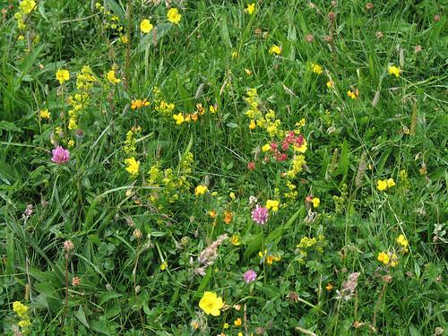 chalkhill_flowers1