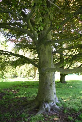 Easy Climb Tree
