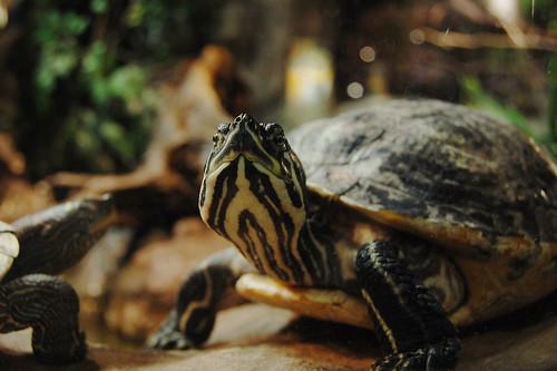 Turtle at Skansen Aquarium