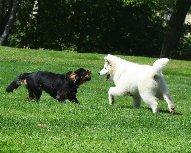 Dog Play 3