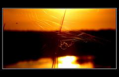 the spider web (fringuellina) Tags: light sarah spider spiderweb natura bugs cobweb bec brava insetti ragno tela takeabow ragnatela supershot senaarrubia fringuellina lateladelragno