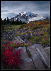Rainier Fall Bouquet (Mike Hornblade) Tags: fall landscape rocks paradise mtrainier mazamaridge mtrainiernationalpark