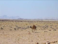 2464 (satinam2) Tags: africa botswana namibia himba