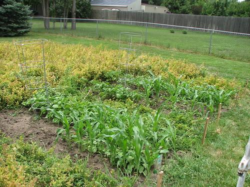 My Garden Plot