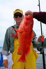 Gorgeous Yellow-Eye Rockfish Caught In Alaska! - Bobby Braun - Photo by Capt. Robert L. Brodie of TEAM BRODIE CHARTERS (teambrodiecharters) Tags: fish alaska fishing rockfish angler yelloweye oldfish thelastfrontier sportsmancovelodge beautifulfish bobbybraun salterycove landofthegreat