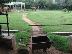 Sri Chamarajendra Zoological Gardens (dciandy) Tags: india elephant zoo mysore mysorezoo srichamarajendrazoologicalgardens