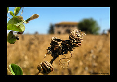 """scorcio campestre (MarcoBucci) Tags: italy canon powershot campagna marco breathtaking naturalmente naturesfinest goldenmix a710is """"wonderfulworldmix"""""""