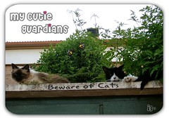*My Cutie Guardians* (aunqtunolosepas) Tags: door pet cats pets cute up animal animals cat puerta kitten funny bea sweet beware adorable kitty gatos cutie lucas gato kitties bunch missy gata felinos felino animales cuteness gatitos mascota mascotas guardian chicos arriba guardians divertido cuidado vigilancia custodian guardianes custodians impressedbeauty aunqtunolosepas