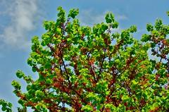 Se  il  denaro  crescesse  sugli  alberi a me  capiterebbe  un  bonsai  (Boris  Makaresko).