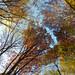 Autumn in the woods near Olanesti, Romania