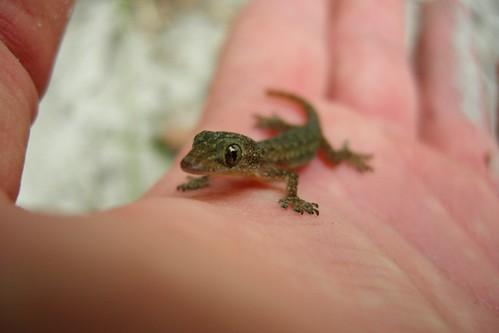 Little Friend