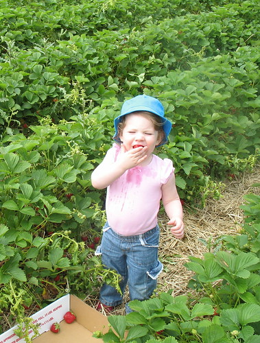 Picking Strawberries 6