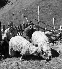 Esztina (Eseme) Tags: people bw mountains animals milk sheep romania coolest radnai krptok ysplix radnaihavasok muniirodnei rodneimountains carphathians psztorok juhok esztina