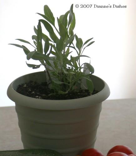 White Sage (Bee Sage)