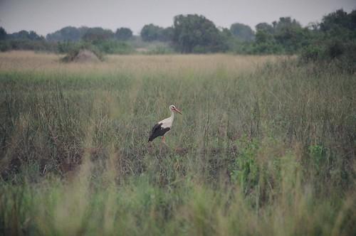 Uganda - QENP Rich Bird Life 5
