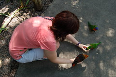 Birdies. (Julieface) Tags: zoo lowry parrots lorikeets lowryparkzoo