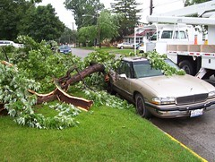 07-19-07 004 (ianandrach2) Tags: oops hugetree stormdamagejuly2007