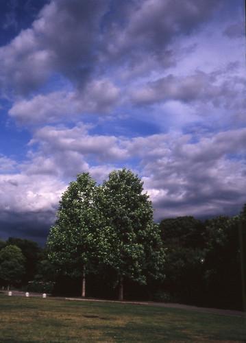 越谷梅林公園の初夏
