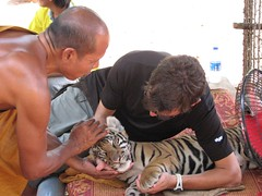 IMG_0682 (Marco y Polo) Tags: tigres kwai marcoypolo