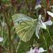 Green White Photo 7