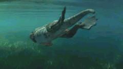 17 Amb swims