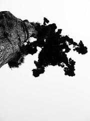 the top (amaret) Tags: trees forest aaron redwood defense treetop maret humbolt treesit aaronrmaret