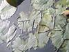 Black1 still (CMYK2007) Tags: light still fast rage sharp hollow
