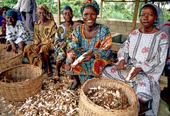 Cassava processing, a source of employment to ...