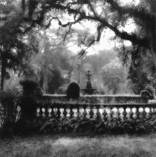Sally Gall, Rio Botanical Garden 3, 1993