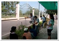 ปลูกผักสวนครัวในเมือง