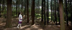 fairy (inge vandamme) Tags: light portrait nature fashion silhouette fairytale forest landscape dreamscape ingevandamme