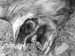 Creepy stump thing