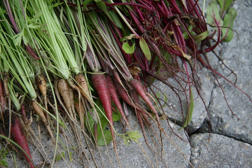 thinned carrots and beets