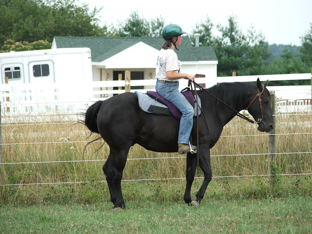 Little Joe Bareback Saddle? | EquiFriends