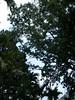 96.02.28百年肖楠巨木群DSCN9077