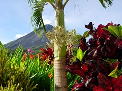 amazing place, beautiful volcano and beautiful plants