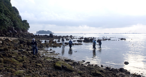 rocky shore view