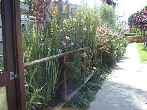 Walk street landscaping