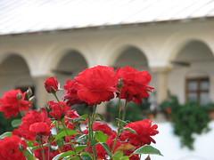 Horezu Monastery - by bortescristian