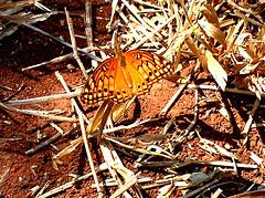 HPIM6728 (Henrique César Multimídia) Tags: flores abelha inseto borboleta pardal aranha formiga lagartixa cigarra teiadearanha invertebrado enxame arapuá umpaisparatodos fotosmacro