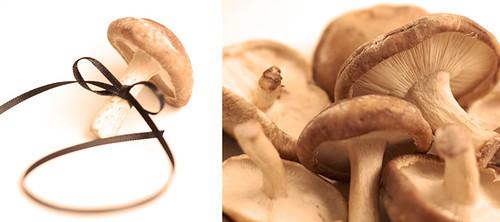 Mushroom Dippy