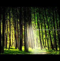 forest light (jesuscm) Tags: autumn trees light espaa naturaleza luz nature forest spain nikon rboles camino walk textures bosque otoo soria texturas elburgodeosma espaarural ruralspain saariysqualitypictures jesuscm bestcapturesaoi magicunicornverybest magicunicornmasterpiece magiayfotografia elitegalleryaoi thelittlebookoftreasures