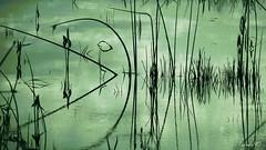Pac Man ? (Amiela40) Tags: pacman imagination reflets rflection tiges photoquebec lemondemerveilleuxdelaphoto