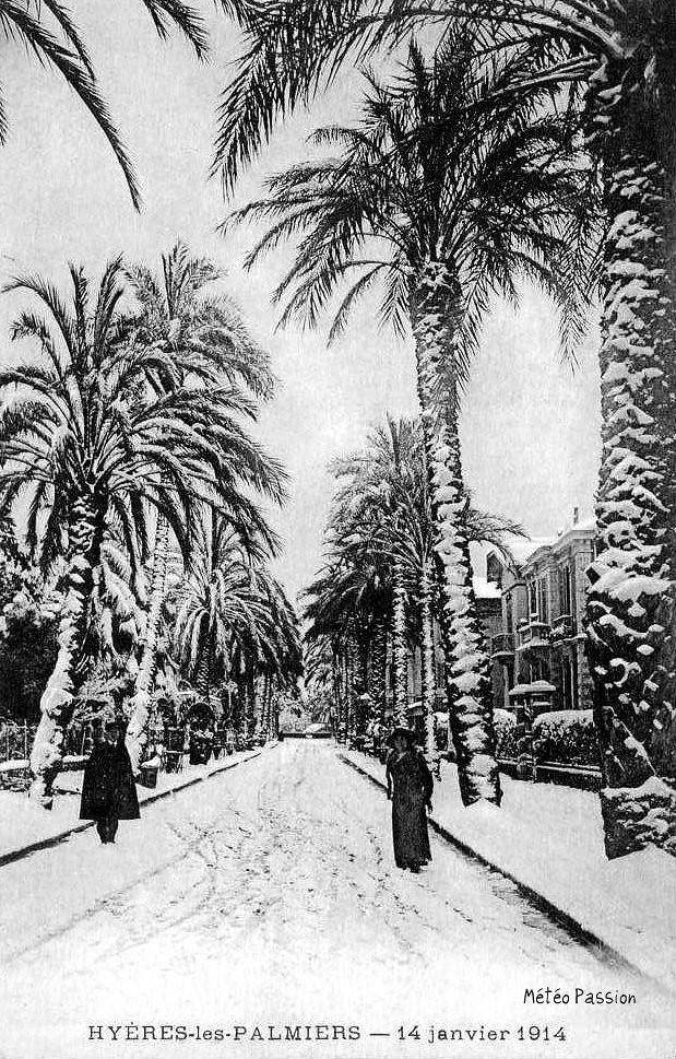 palmiers de Hyères sous la neige le 14 janvier 1914