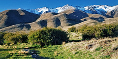 Molesworth (Daniel Murray (southnz)) Tags: newzealand mountain snow grass station landscape scenery hill nz southisland muster molesworth southnz eos50escanfromprint