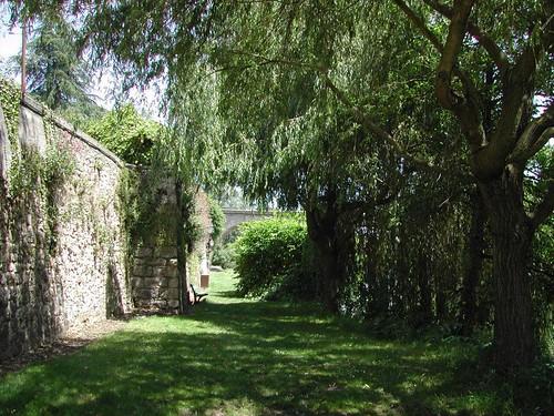 shadows tree