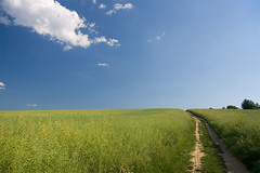 In The Country (Pavel Vanik) Tags: summer sky field clouds canon way landscape eos czechrepublic plzen 30d 1755is fieldpath colorphotoaward
