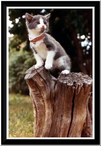 Big stump... little kitty